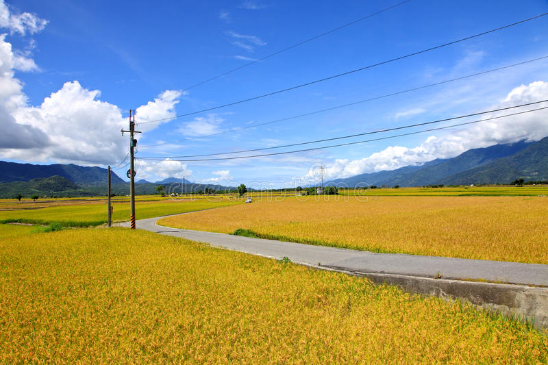 Road cross the rice field in Taidong,Taiwan stock images