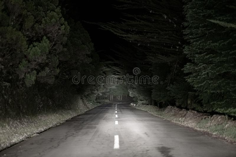 The road in the dark florest. The road in the middle of the night in a dark florest landscape royalty free stock photo