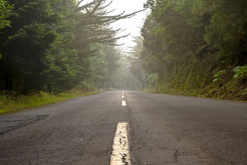 The road in the dark florest. The road in the middle of the night in a dark florest landscape stock images