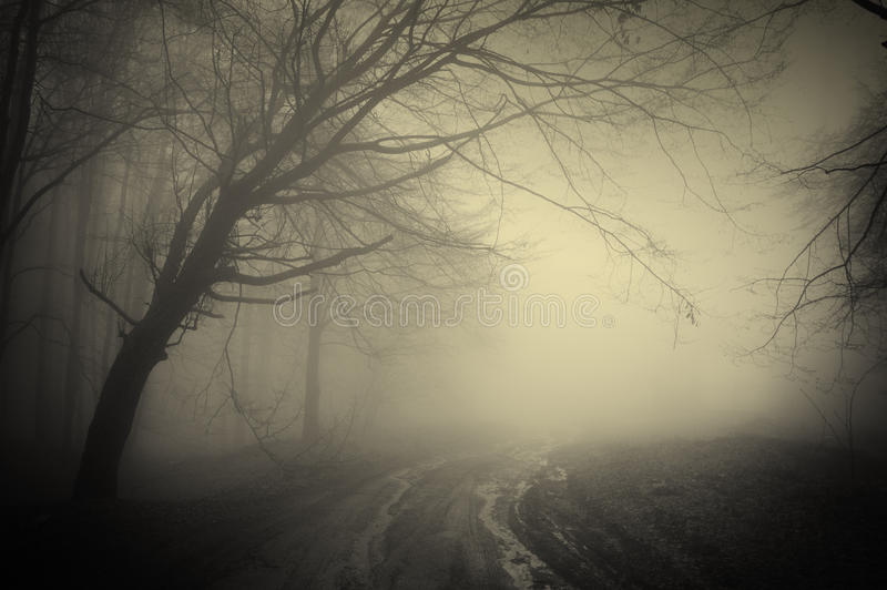 Download Road through a dark forest stock photo. Image of evening - 18036810
