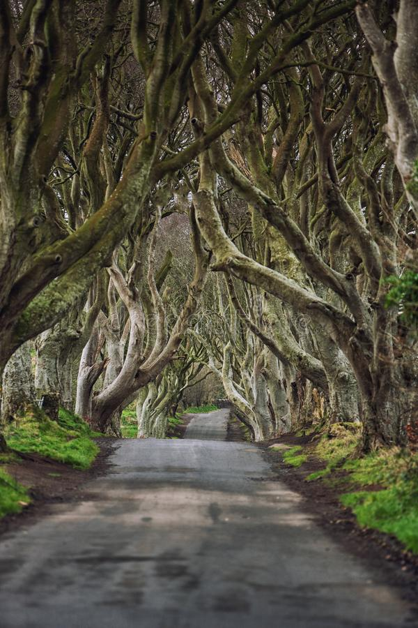 Road through the Dark Hedges  a unique beech tree tunnel road n Ballymoney, Northern Ireland. Game of thrones location.  royalty free stock photography