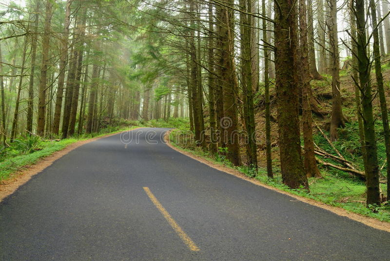 Road In The Deep Forest Stock Image