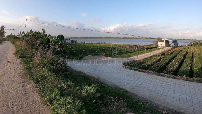 The road on the dike is filled with soil on the flower gardens royalty free stock image