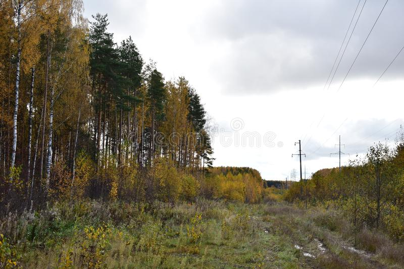 Road dirt forest pine and deciduous trees birch bushes colorful, green grass, sky clouds clouds, power. Line stock image