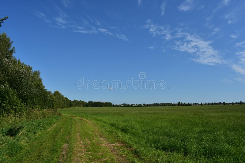The road is dirt, rural field with grain crops, in the distance you can see the village,deciduous forest, blue sky white clouds royalty free stock image