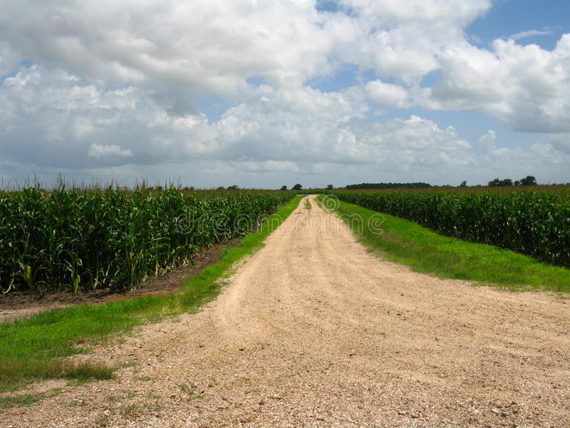 Road Dissappearing Into Corn Field Stock Images