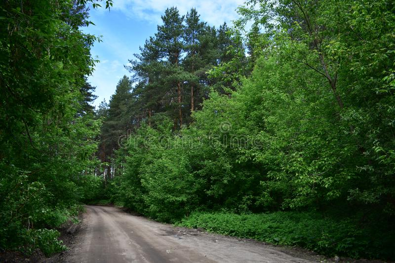 Road evergreen pine Bor deciduous trees bowed their branches to the sky. Alley of trees along the forest road royalty free stock photos