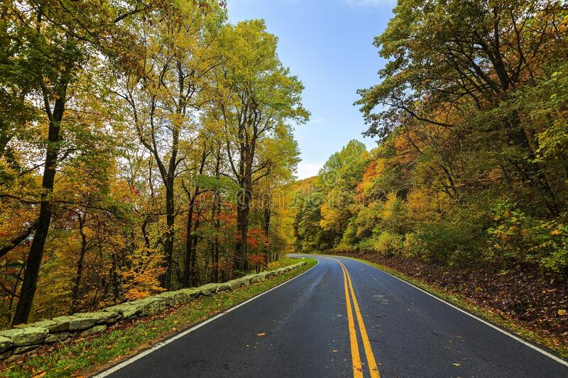 Road through fall forest royalty free stock photos