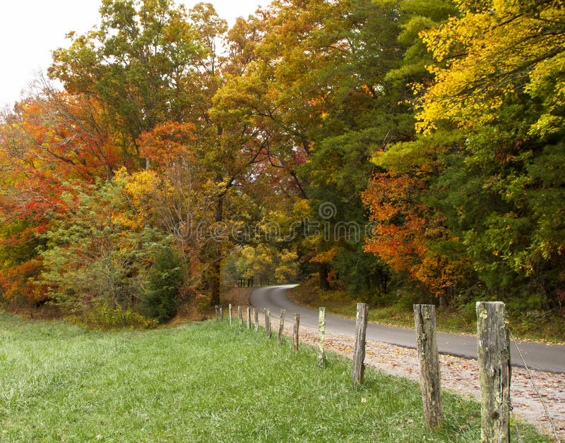 Road Through the Fall Trees stock image