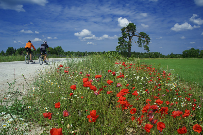 Road in the fantastic world. Training of bicyclists on beautiful road with a blossoming poppy. The picturesque dark blue sky with clouds royalty free stock photography