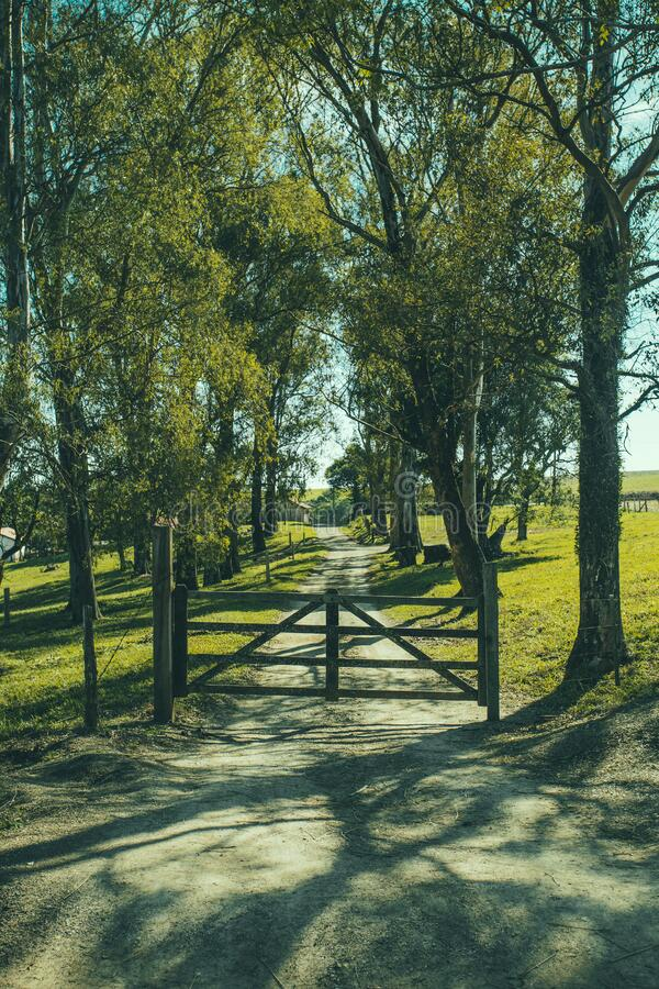 Road With Fence in Between of Green Trees stock photos