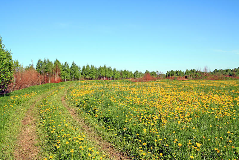Download Road on field stock image. Image of calm, dandelion, field - 11944961
