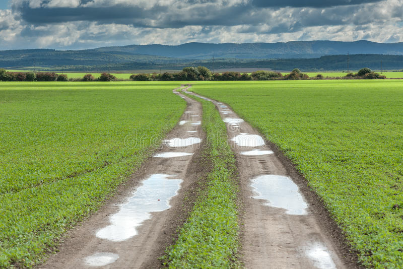 Download Road stock image. Image of scenics, wheat, freedom, nature - 37687561