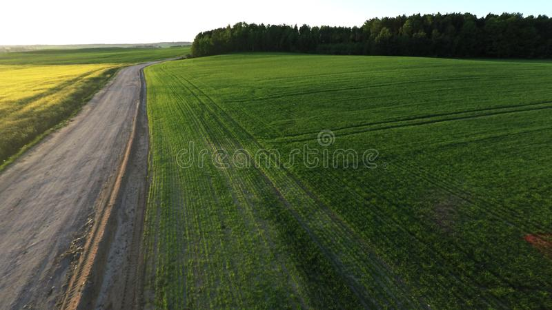 The road into the field. The road goes beyond the horizon. royalty free stock photo