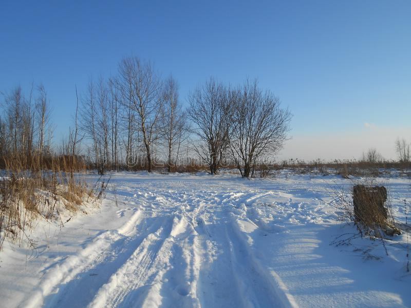 Road in the field in the wintertime with small trees. stock image