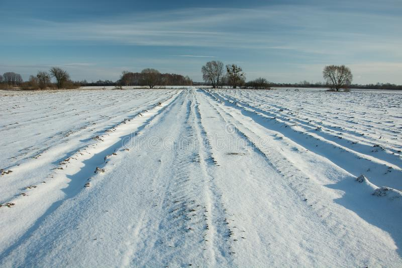 Road and fields covered with snow, trees on the horizon and blue sky. View on a sunny winter day stock images