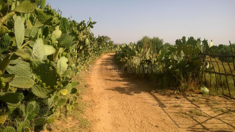 Road between fields in my land royalty free stock images