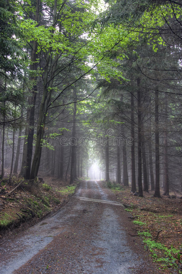 Download Road In Foggy Coniferous Forest Stock Image - Image: 19820341