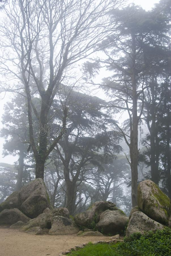 A road in a foggy forest. Trees and rocks in the fog. royalty free stock photos