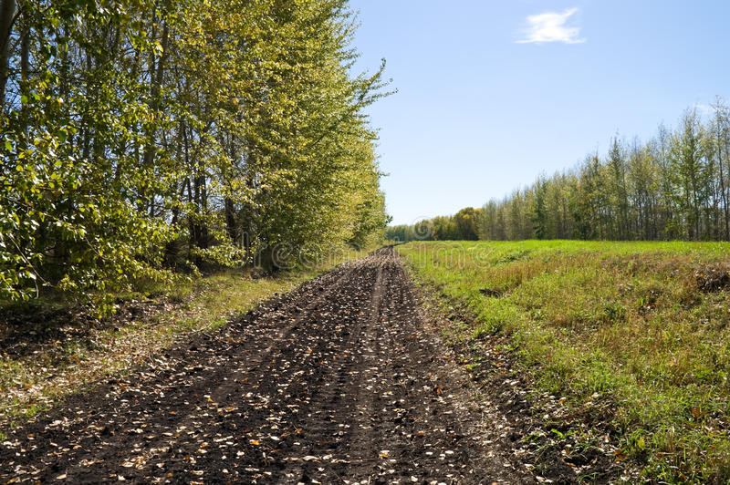 The road in the forest. Autumn Landscape - rural road through the woods royalty free stock image