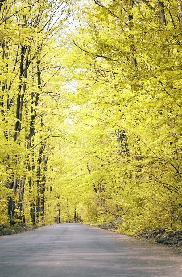 Download Road in  the forest stock image. Image of thought, freedom - 26633955