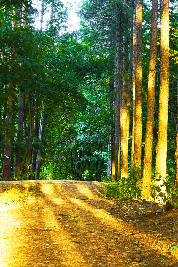 Road in the forest stock photos