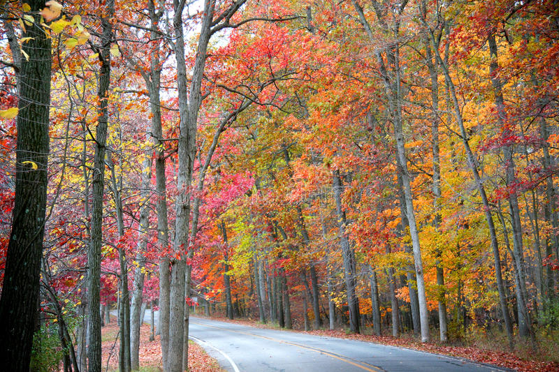 Road in forest in autumn. Road through forest in peak autumn colors royalty free stock image