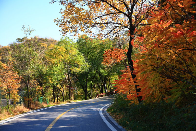 Road through forest in autumn stock photo