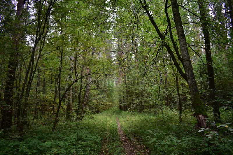 The road in the forest gives peace and joy from shady trees, moss, foliage, grass. Walking in the woods stock photos