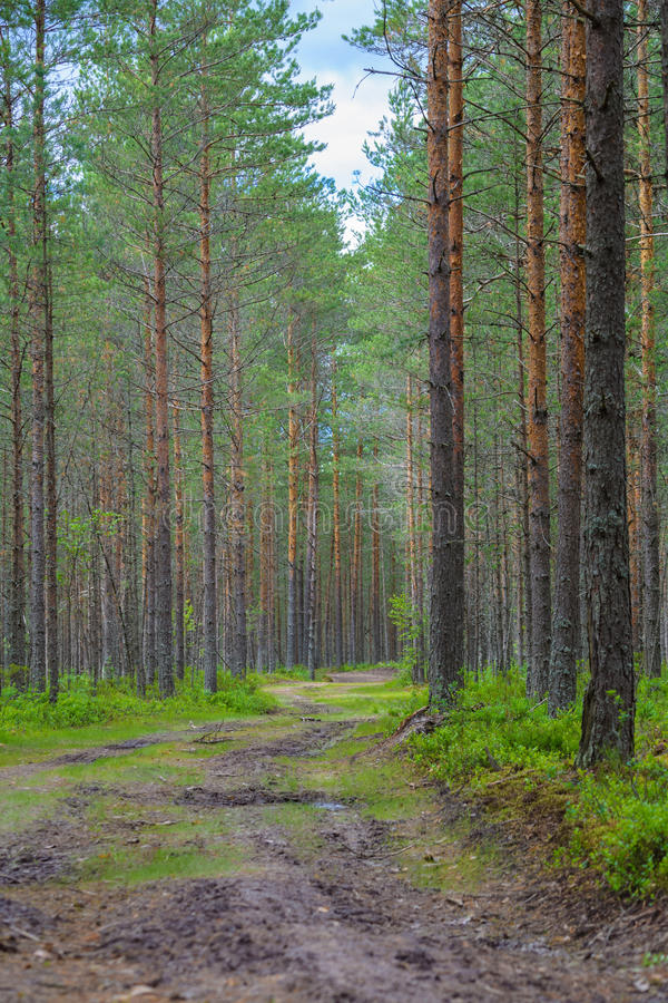 Road in a forest stock photo