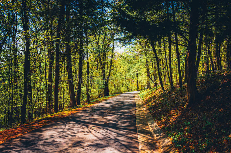 Road through a forest at Monticello, Virginia. Road through a forest at Monticello, Virginia stock photography
