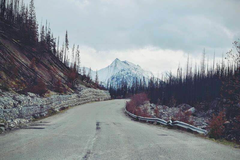 Road through forest in mountains royalty free stock photography