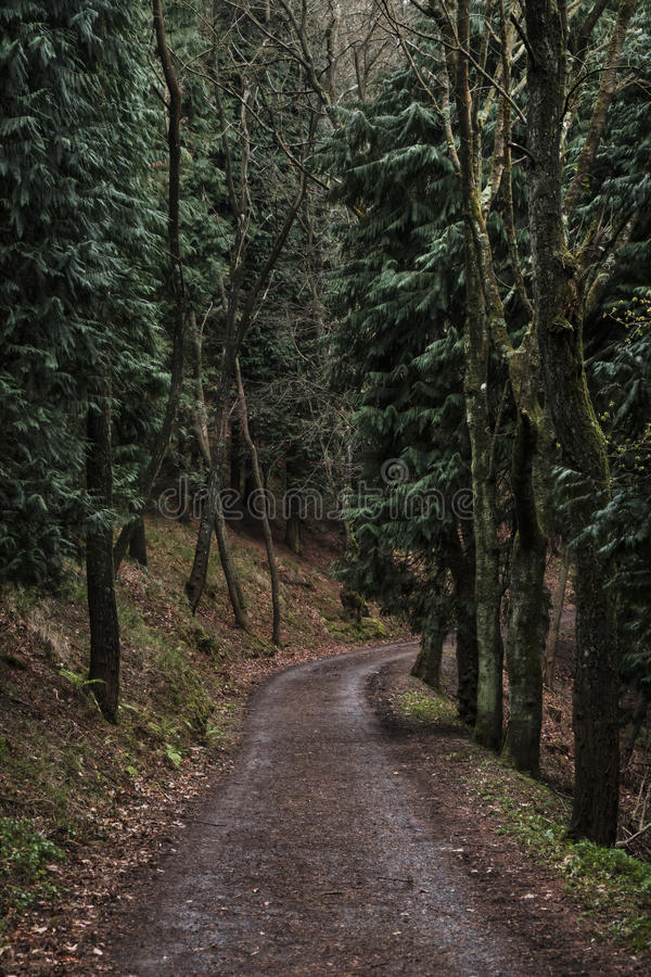Road in the forest. Road in the mystical forest royalty free stock photo