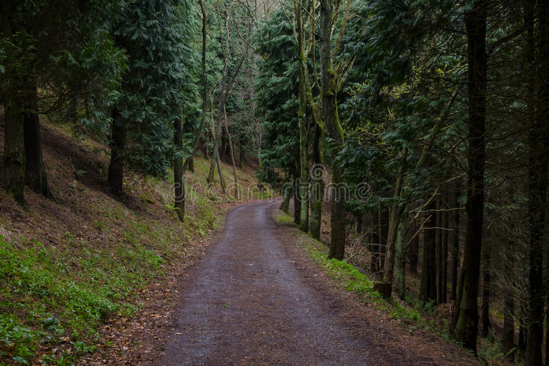 Road in the forest. Road in the mystical forest royalty free stock images