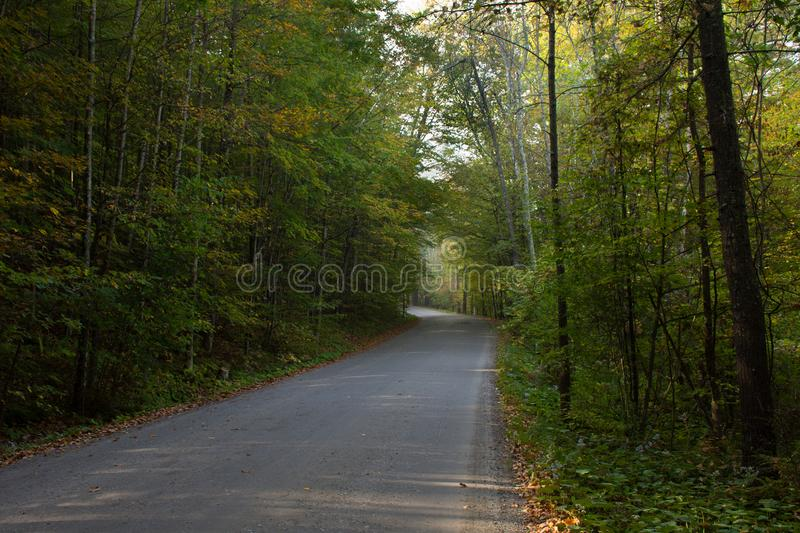 Road Through Forest stock images