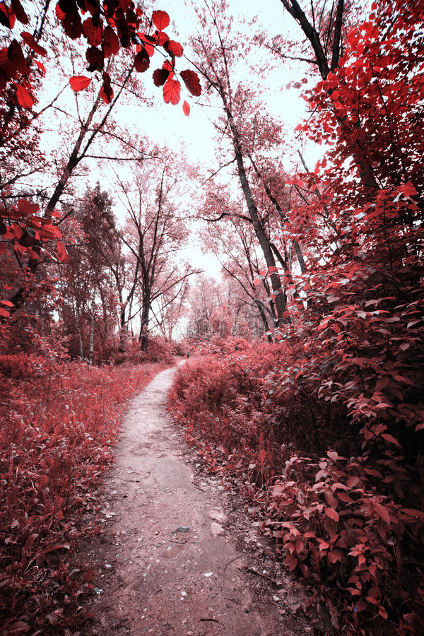 Road in the forest. Photo of summer landscape shot in the IR spectrum royalty free stock images