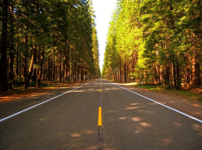 Road Through Forest Free Public Domain Cc0 Image