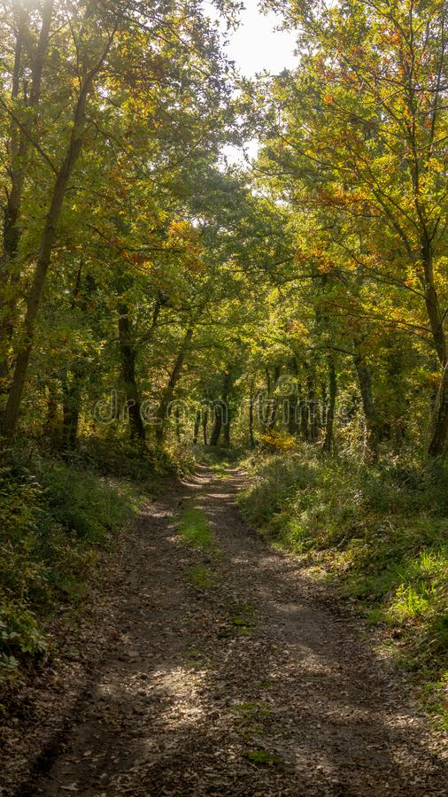 A road in a autumn forest with sun rays. A road in a forest with sun, rays, trees, branch, leaves royalty free stock photo
