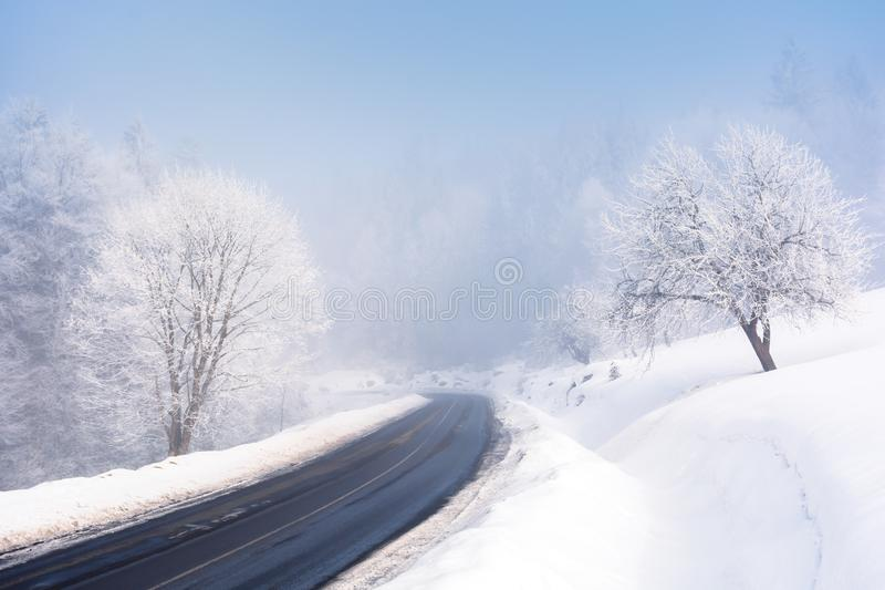 Road through forest in winter. Amazing foggy weather. trees in hoarfrost. roadside covered with high snow. cold and bright forenoon. deceptive nature beauty stock photo