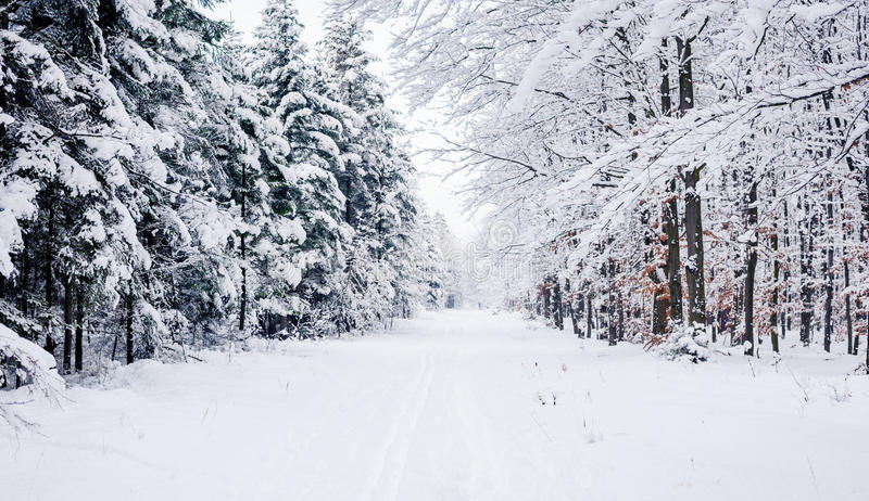 Road through frozen forest with snow. Winter forest nature snow landscape outdoor background royalty free stock photos