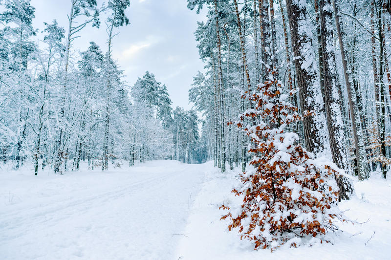 Road through frozen forest with snow. Winter forest nature snow landscape outdoor background stock images