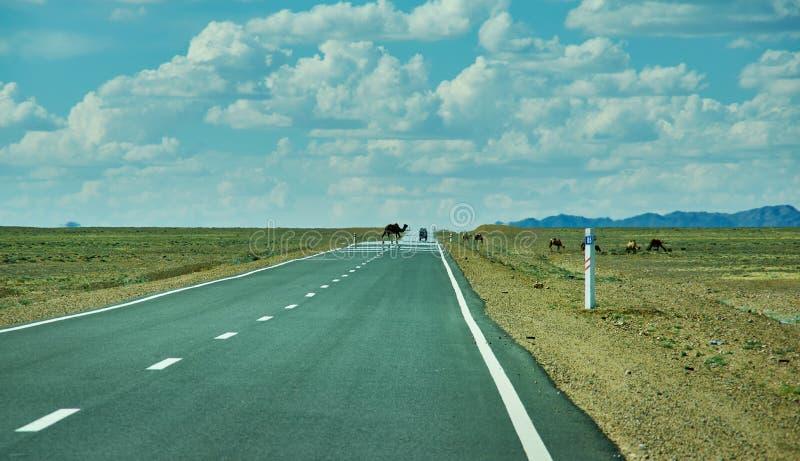 Road in Gobi Desert. Huysiyn govi, Mongolia royalty free stock image