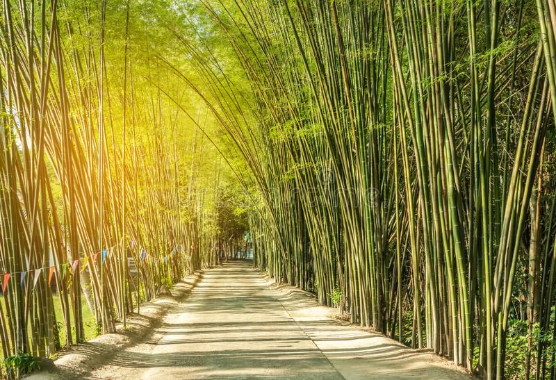 Road with green bamboo forest curve natural tunnel cave royalty free stock photography