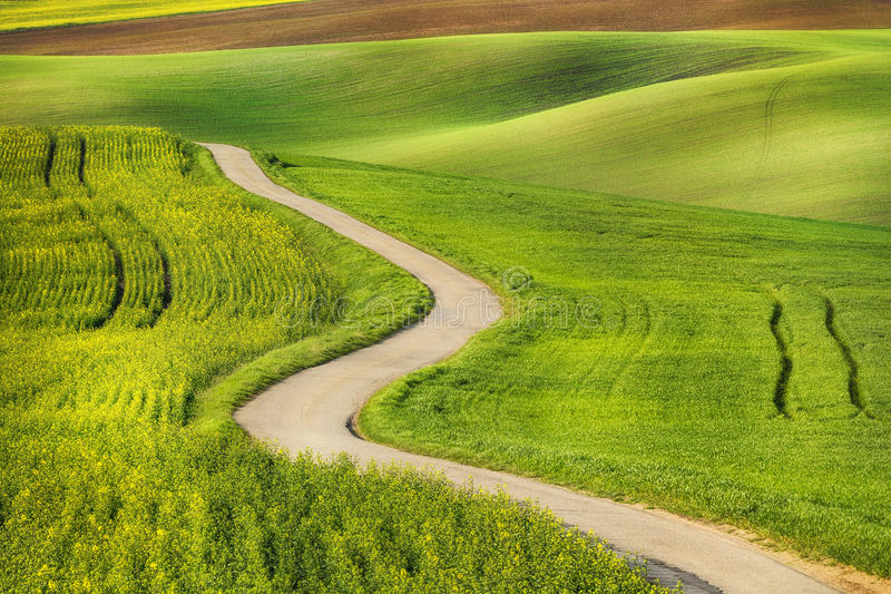 Road in the green field waves. South Moravia, Czech Republic stock photos