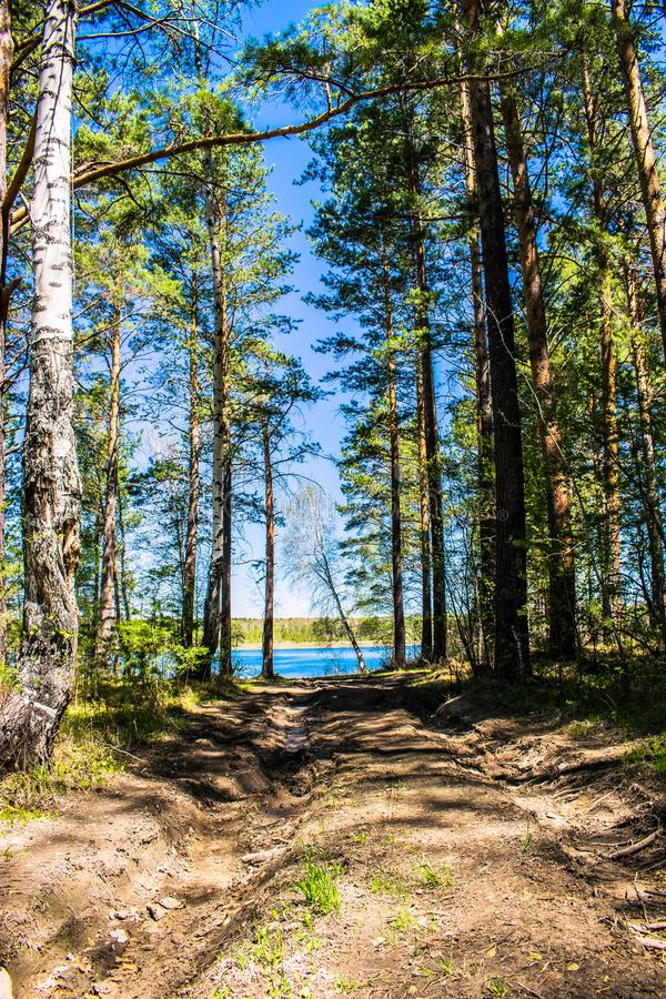 The road through the green forest to the river on a clear day royalty free stock photography