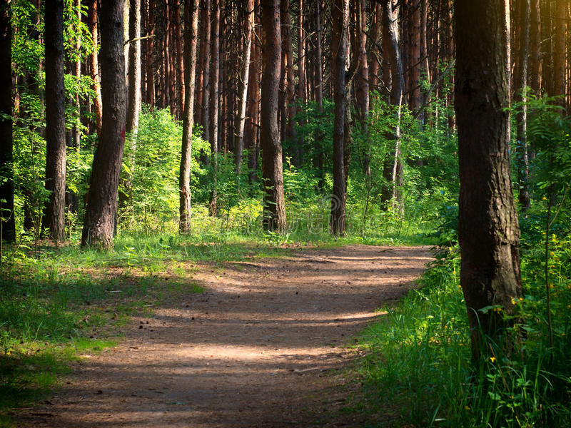 A road in a green forest. stock photos