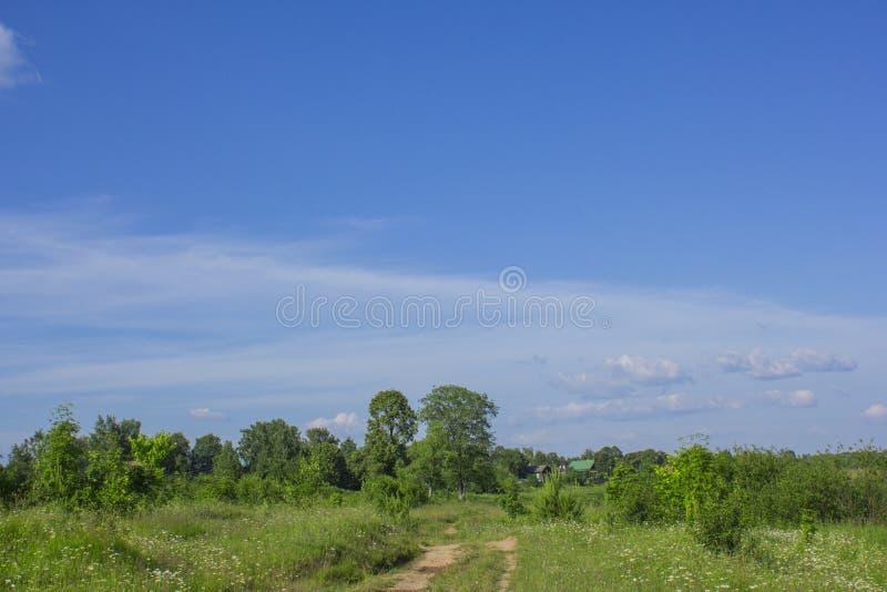 The road through a green meadow royalty free stock photos