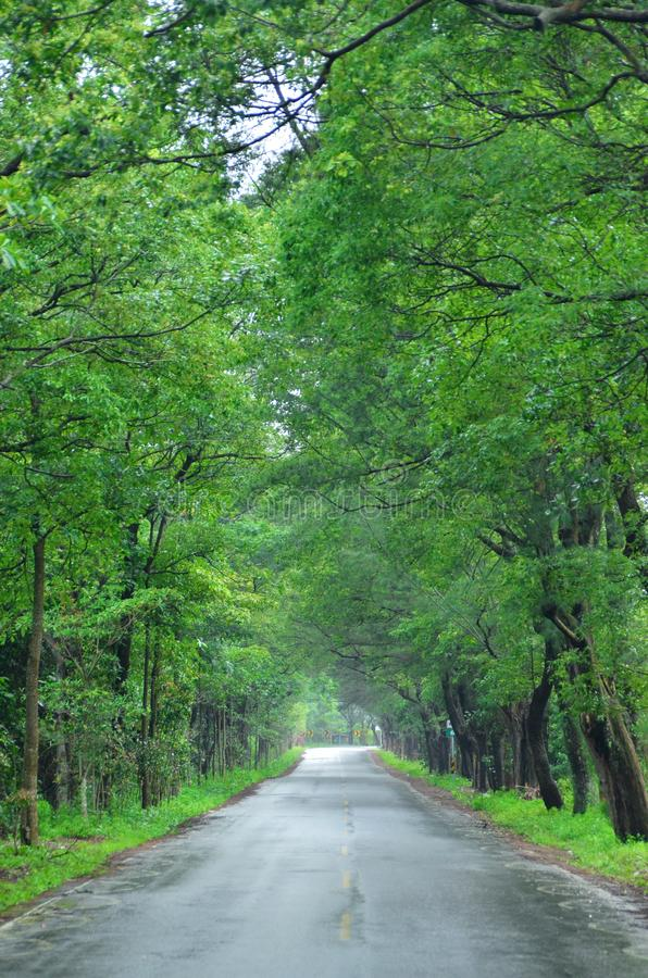 Road through a green tunnel royalty free stock image