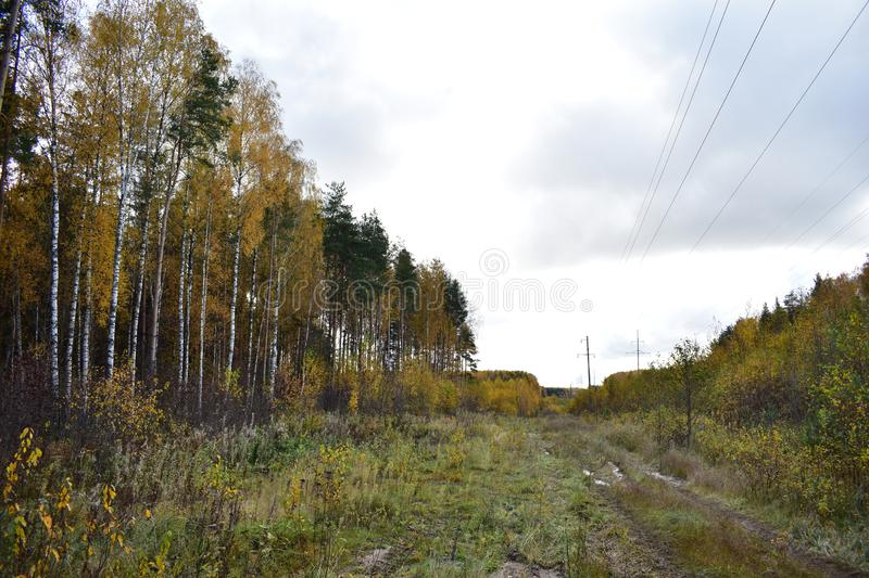 Road high forest pine and deciduous trees birch bushes colorful, green grass, sky clouds clouds, power. Line stock photos