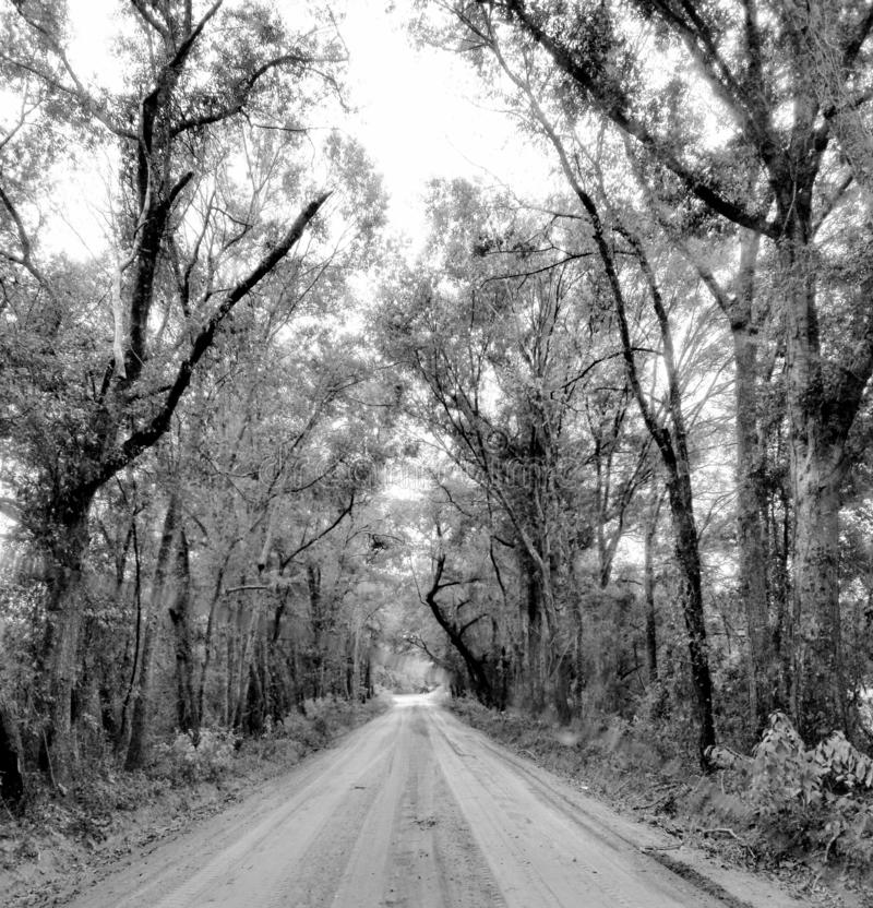 Road Home Again royalty free stock photo